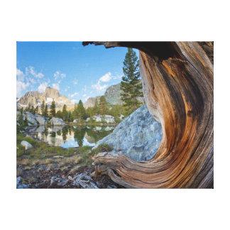 Los E.E.U.U., California, bosque del Estado de Impresión En Lienzo
