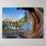 Los E.E.U.U., California, bosque del Estado de Poster