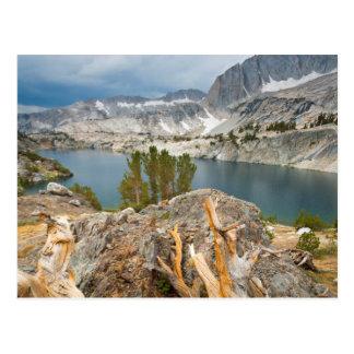 Los E.E.U.U., California, bosque nacional de Inyo Tarjeta Postal