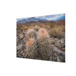 Los E.E.U.U., California, cactus en desierto Impresión En Lienzo