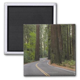 Los E.E.U.U., California, camino a través del bosq Imán Cuadrado