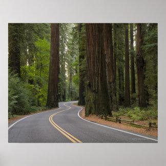 Los E.E.U.U., California, camino a través del bosq Posters