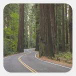 Los E.E.U.U., California, camino a través del bosq Calcomanía Cuadradas