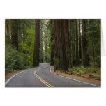 Los E.E.U.U., California, camino a través del bosq Tarjetas