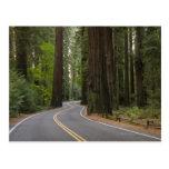 Los E.E.U.U., California, camino a través del bosq Tarjeta Postal