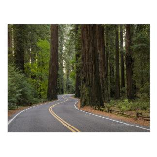 Los E E U U California camino a través del bosq Tarjeta Postal