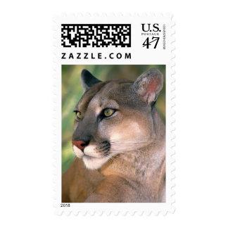 Los E.E.U.U., California, el condado de Los Timbre Postal