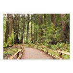 Los E.E.U.U., California, el condado de Marin, mad Fotografía