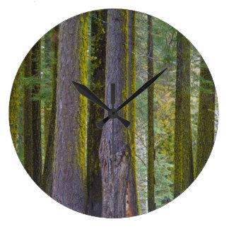 Los E.E.U.U., California. El musgo cubrió troncos Reloj Redondo Grande