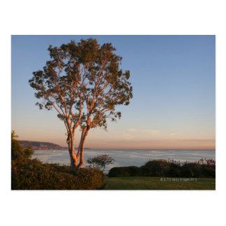 Los E.E.U.U., California, Laguna Beach, árbol en l Tarjetas Postales