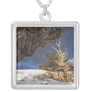 Los E E U U California montañas blancas Antigu Collar Personalizado