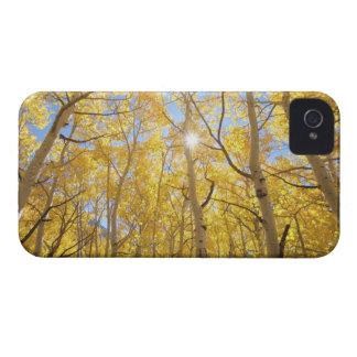 Los E.E.U.U., California, montañas de Sierra Nevad Case-Mate iPhone 4 Cobertura