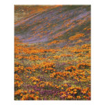 Los E.E.U.U., California, montañas de Tehachapi, 2 Impresiones Fotograficas