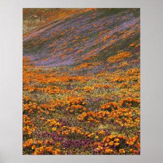 Los E.E.U.U., California, montañas de Tehachapi, 2 Póster