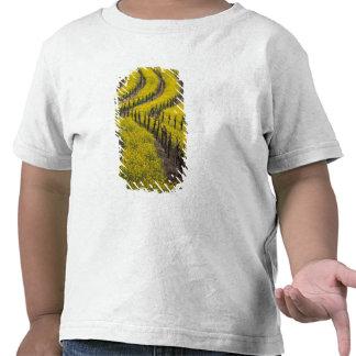 Los E.E.U.U., California, Napa Valley, Los Camisetas