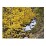 Los E.E.U.U., California. Obispo Creek y árboles d Tarjeta Postal