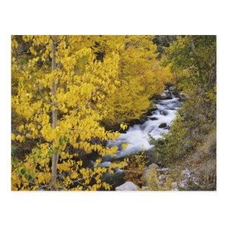 Los E.E.U.U., California. Obispo Creek y árboles Postales