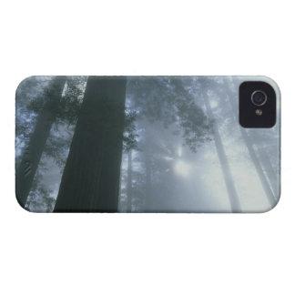 Los E.E.U.U., California, parque nacional de la iPhone 4 Case-Mate Protector