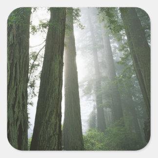 Los E.E.U.U., California, parque nacional de la Pegatina Cuadrada
