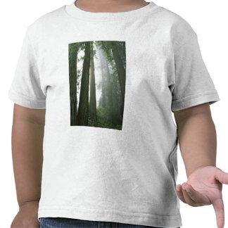 Los E.E.U.U., California, parque nacional de la Camisetas
