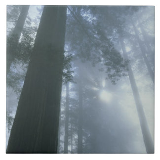 Los E.E.U.U., California, parque nacional de la se Azulejo Cuadrado Grande