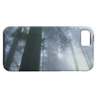 Los E.E.U.U., California, parque nacional de la se iPhone 5 Case-Mate Fundas