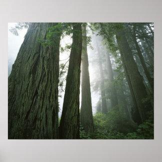 Los E.E.U.U., California, parque nacional de la se Impresiones