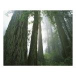 Los E.E.U.U., California, parque nacional de la se Fotografia