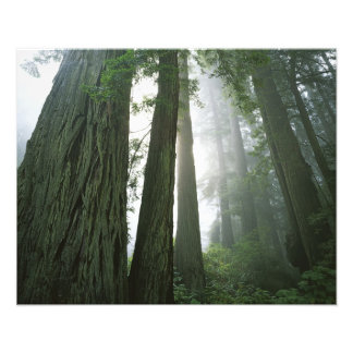 Los E E U U California parque nacional de la se Fotografia