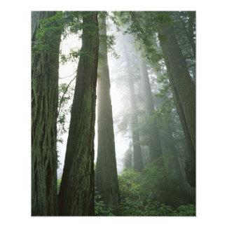Los E.E.U.U., California, parque nacional de la se Arte Con Fotos