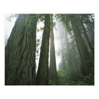 Los E.E.U.U., California, parque nacional de la se Foto