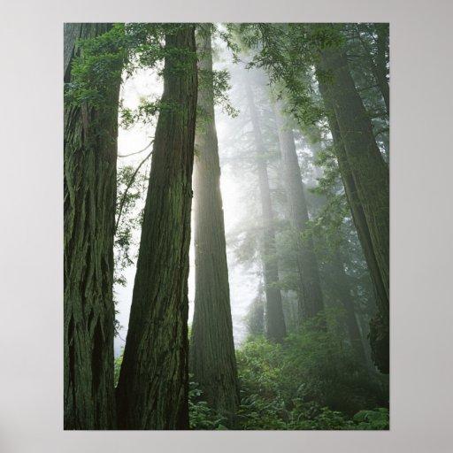 Los E.E.U.U., California, parque nacional de la se Póster