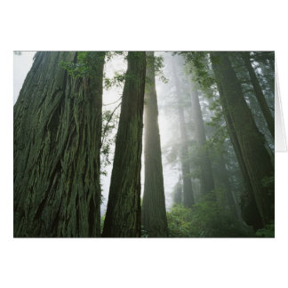 Los E E U U California parque nacional de la se Tarjeta