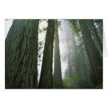 Los E.E.U.U., California, parque nacional de la se Tarjeta De Felicitación