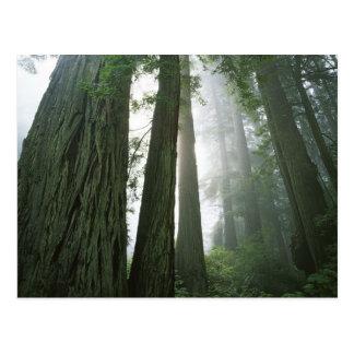Los E.E.U.U., California, parque nacional de la Tarjeta Postal