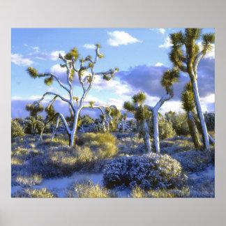 Los E.E.U.U., California, parque nacional de la yu Impresiones