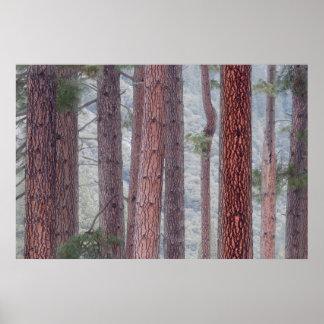 Los E.E.U.U., California, parque nacional de Póster