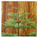 Los E.E.U.U., California, parque nacional de Yosem Azulejo Cuadrado Grande