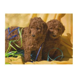 Los E.E.U.U., California. Perritos del caniche Cuadros De Madera
