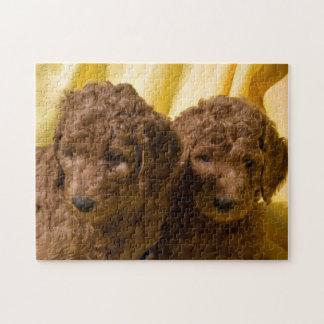 Los E.E.U.U., California. Perritos del caniche Puzzle