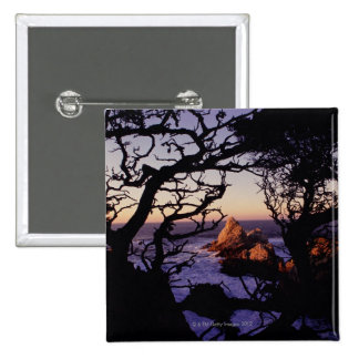 Los E.E.U.U., California, punto Lobos, árbol de ci Pin Cuadrado
