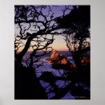 Los E.E.U.U., California, punto Lobos, árbol de ci Póster
