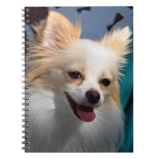 Los E.E.U.U., California. Retrato de Pomeranian Note Book