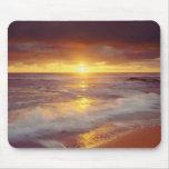 Los E.E.U.U., California, San Diego. Playa de los  Tapetes De Ratón