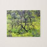 Los E.E.U.U., California, San Diego. Un bosque que Puzzles Con Fotos