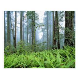 Los E.E.U.U., California, secoya NP. Árboles de la Impresion Fotografica