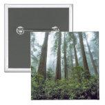 Los E.E.U.U., California, secoya NP. La niebla fil Pin