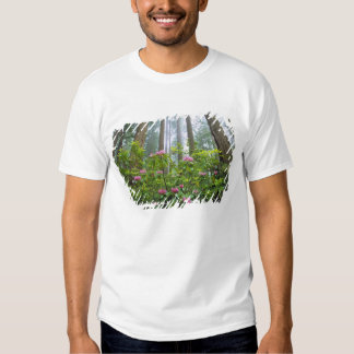 Los E.E.U.U., California, secoya NP. Rododendro Playeras
