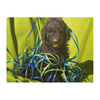 Los E.E.U.U., California. Sentada del perrito del Impresiones En Madera