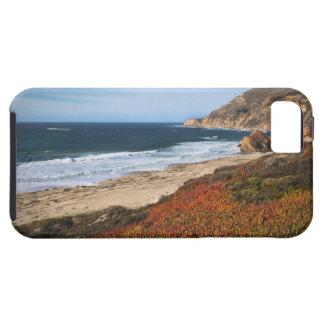 Los E.E.U.U., California, Sur grande, plantas iPhone 5 Carcasas